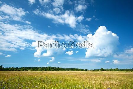 field and beautiful cloudy sky