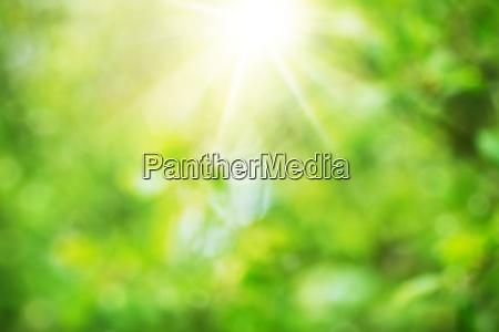 blurred foliage background