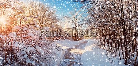 snowy path in snowy winter morning