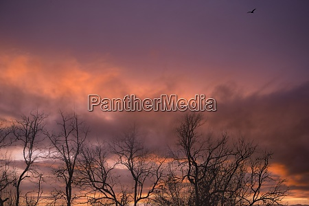 silhouette leafless tree and sunset sky