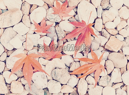 autumn leaves over pebbles background