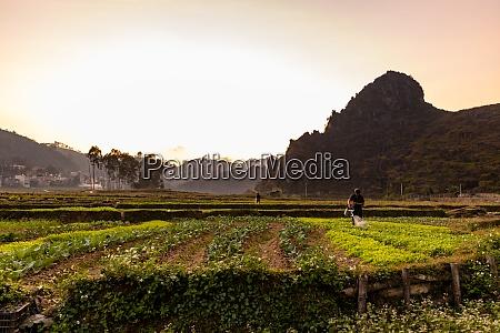 farmland and agriculture at dong van