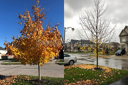 early october and early november