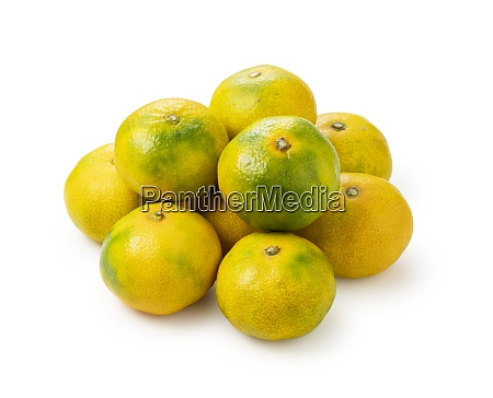 early japanese mandarin oranges on a