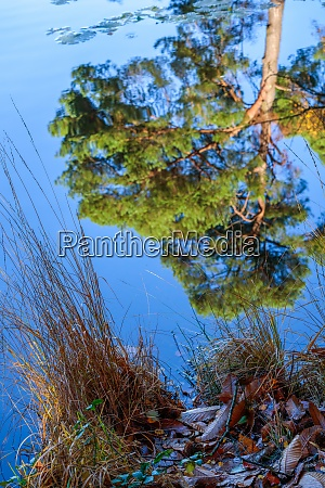 reflections on a sunny autumn day