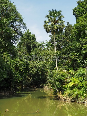 the scenery of the river the