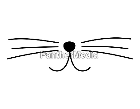 cute cat whiskers