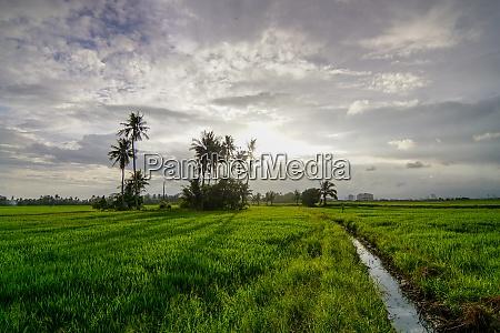 amazing sky at paddy field