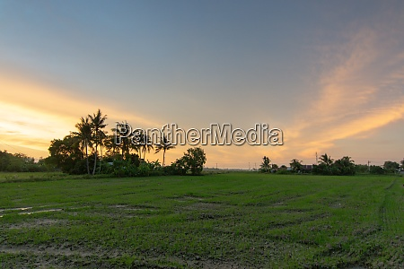 scenic view over field during sunset