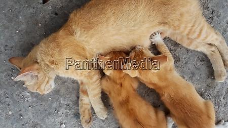 cat mom feed kitten