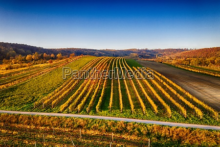beautiful vineyards in weinviertel lower austria