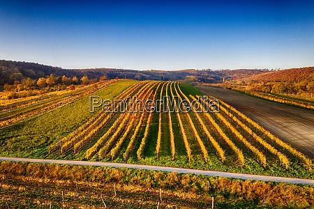 beautiful vineyards in weinviertel lower austria