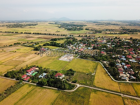 drone view paddy field at malays