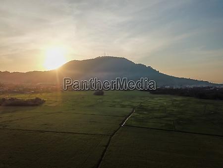 aerial view paddy field plantation