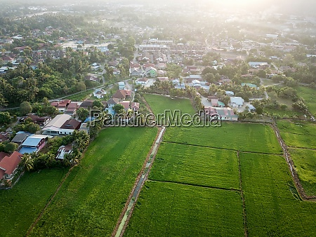 aerial view malays village near paddy