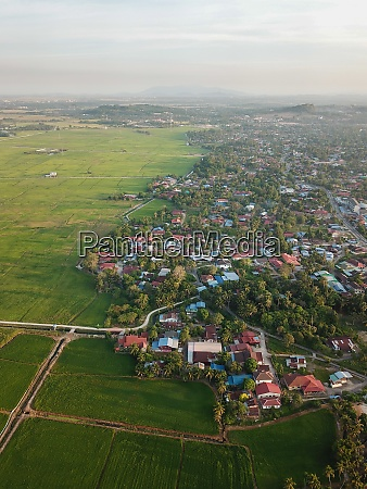 aerial view scenery golden paddy field