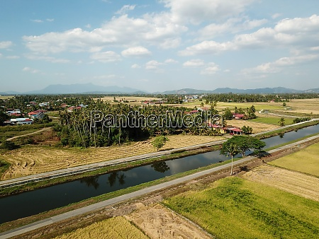 paddy field at malays kampung