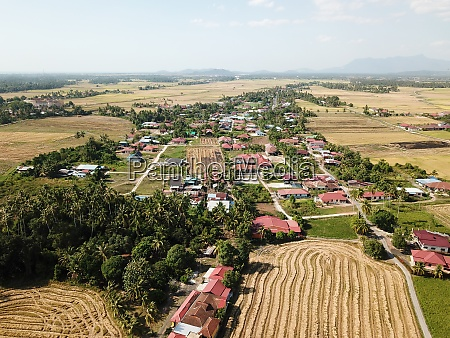 aerial view harvested paddy field