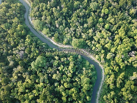 aerial view lush green woodland
