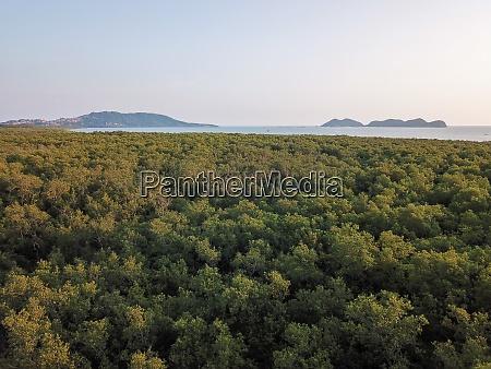 aerial view mangrove jungle at sungai