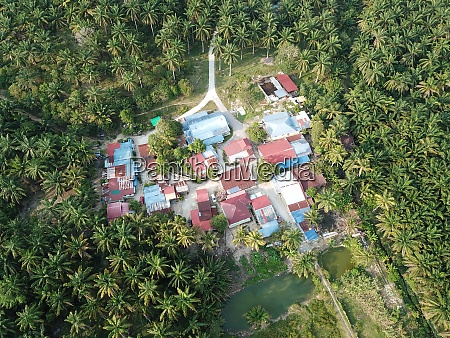 traditional malays village in oil palm
