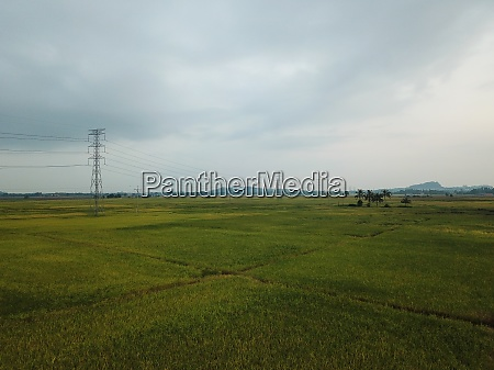 aerial view agricultural paddy field