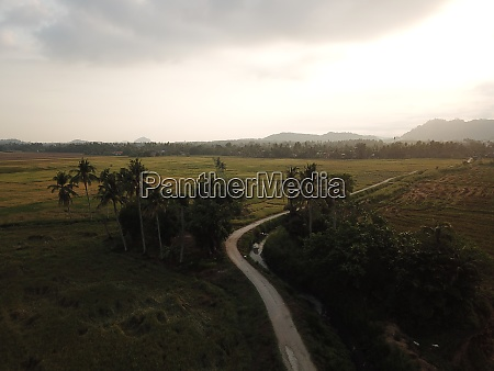 aerial rural view of coconut trees