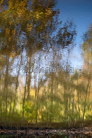 autumn woodland reflected in rippling lake