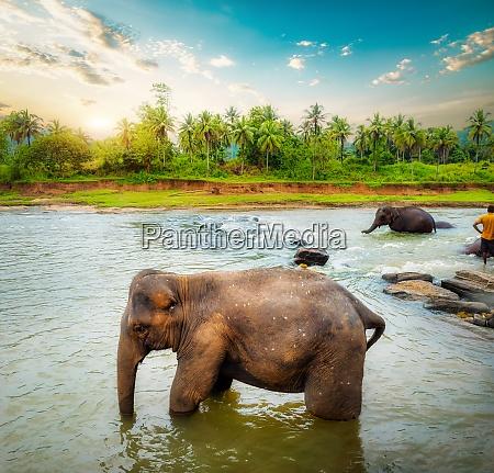 elephant and jungle