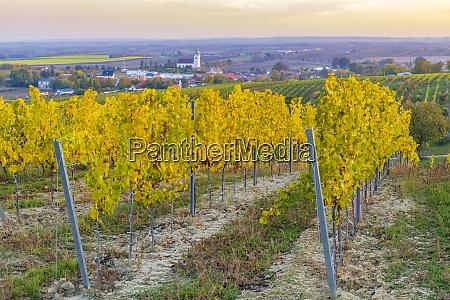 vineyard near unterretzbach in the weinviertel