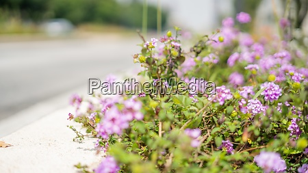 purple flowers next to the street