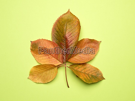 yellow cherry leaves on a green