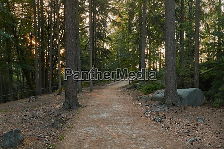 forest hiking path