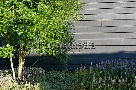 tree and plants on a wooden