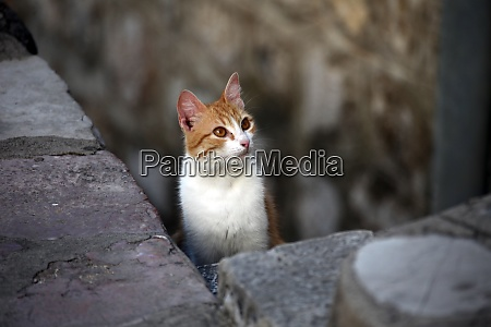 young cute kind domestic cat