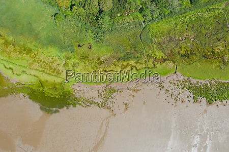 aerial landscape view of trees and