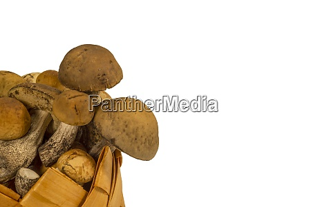 woven container of small fresh boletus