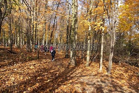 excursion for children in the autumn