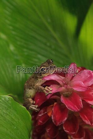 perched on a jewel of burma