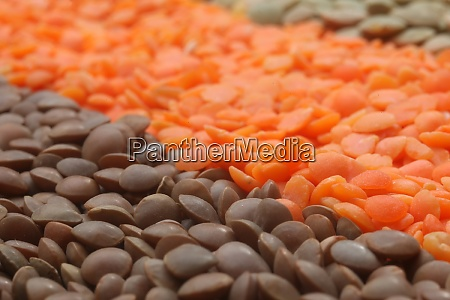 various lentils close up