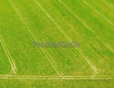 aerial of green agricultural field with
