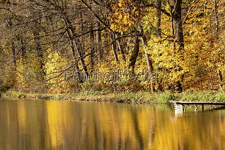 autumn landscape with lake shore