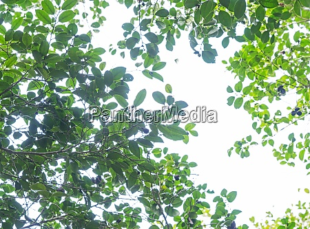 sky and green leaves all over