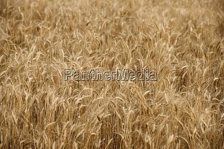 usa south dakota field of crop
