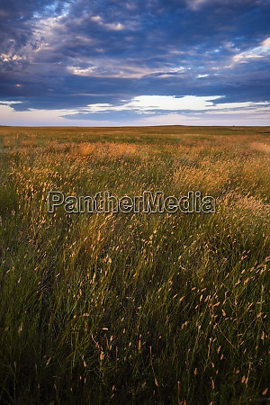 usa south dakota prairie grass field