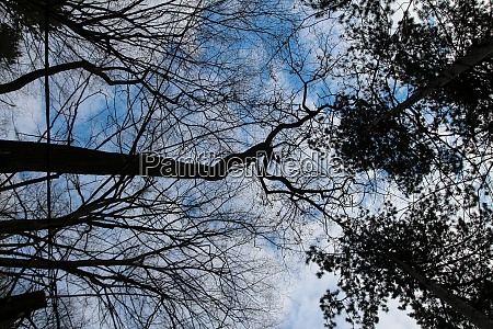 silhouette trees photo sky with