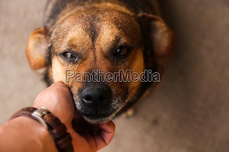 dog animal mammal puppy canine pet