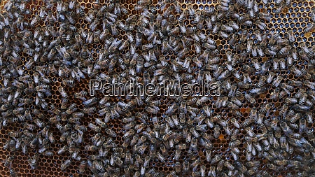 crowd of bees on honeycomb bees