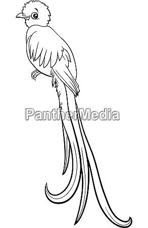 cartoon quetzal bird comic animal character