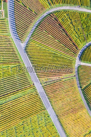 vineyards wine autumn fall season aerial